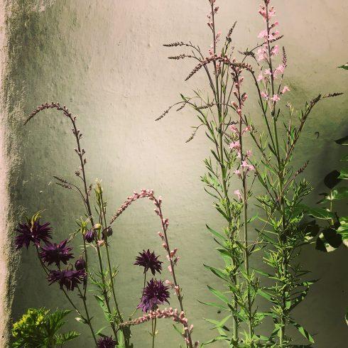 Award winning garden design based in Kent