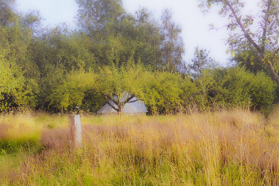 A bell tent in a designed meadow