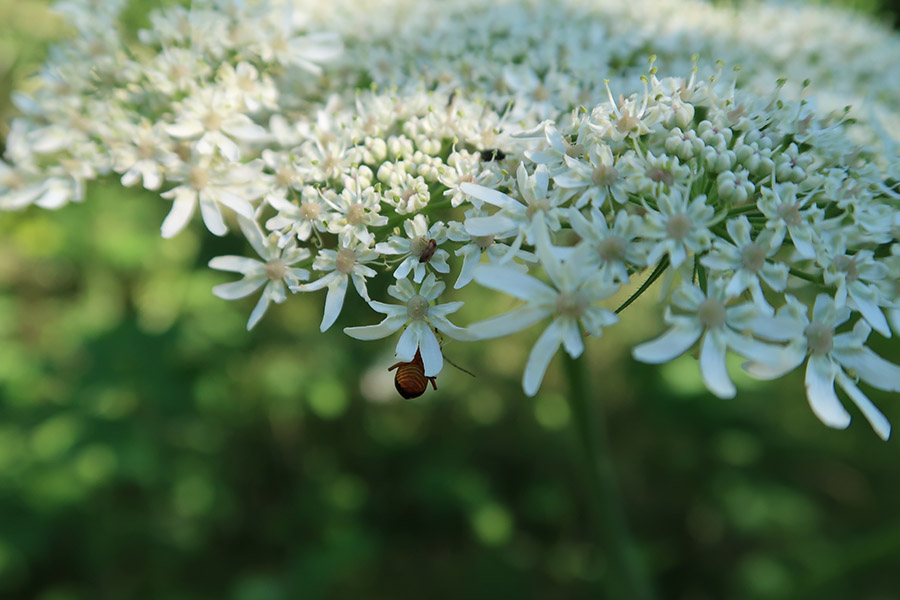 A designed meadow is a haven for insects